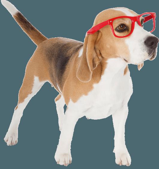 Doggy Image