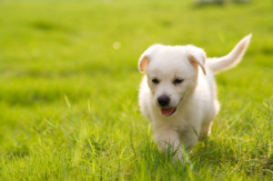dog running in grass