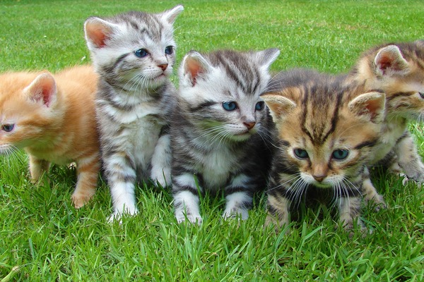 Different Cat Fences