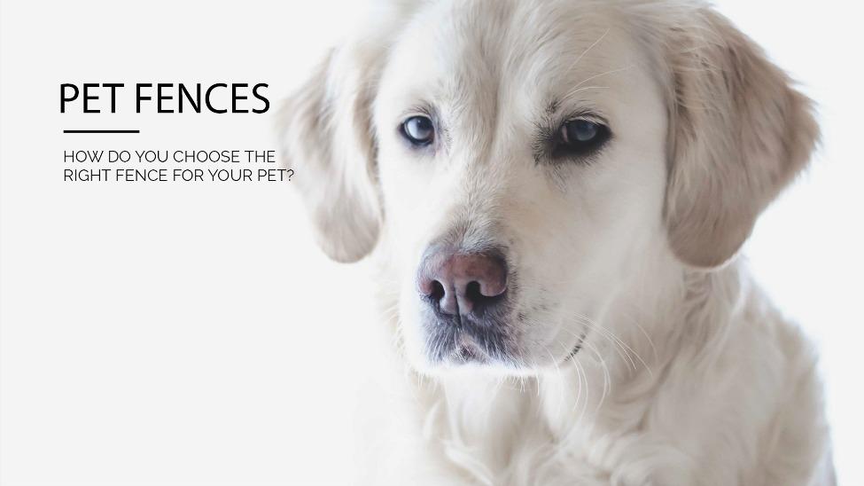 Pet fence pet stop dog fence company pet fence solutioingenieria Images