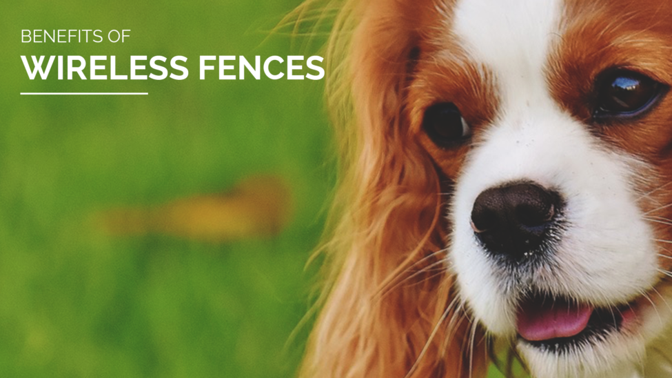 Different Types Of Dog Fences Pet Stop 174 Dog Fence Company