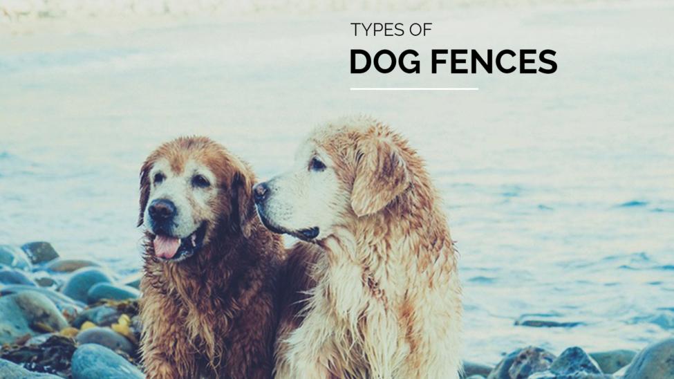 Types of Dog Fences
