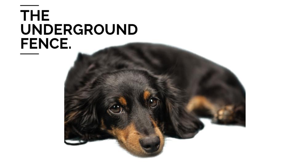 Underground Dog Fences