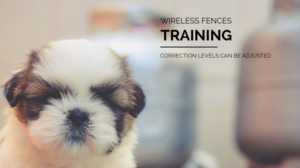 Wireless Fence Training