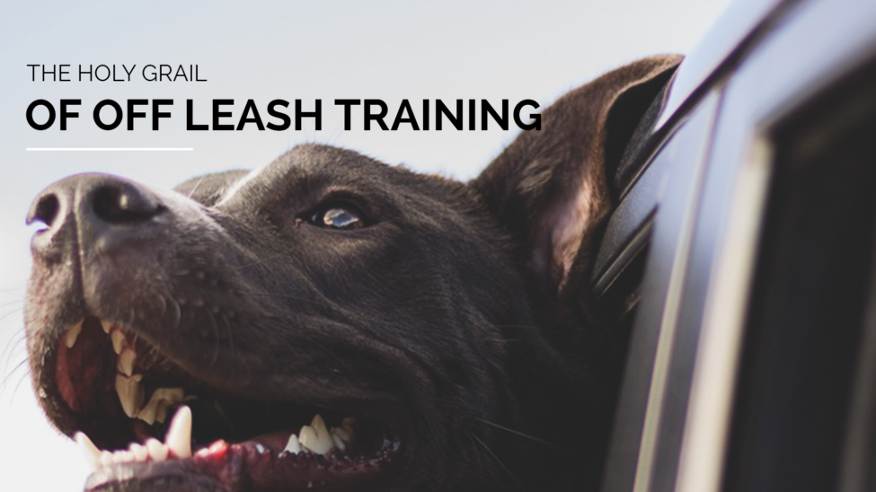 off leash training secrets