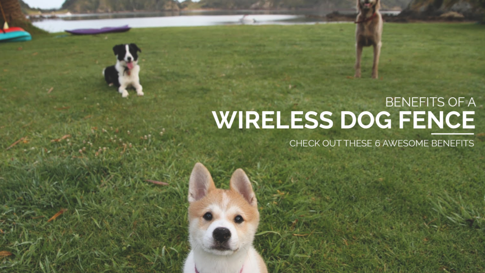 Wireless Pet Fence Petsafe Stubborn Dog U2013 Best