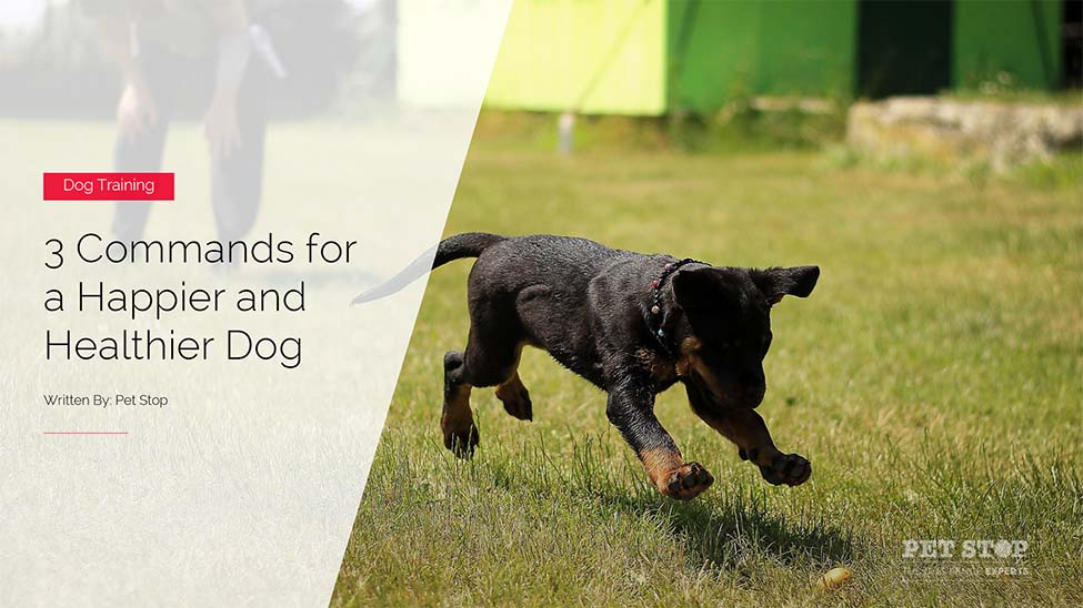 How To Teach Your Dog To Kennel Up