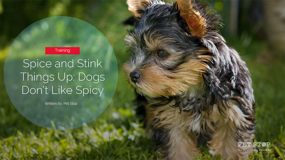 howto stop your dog going in the garden