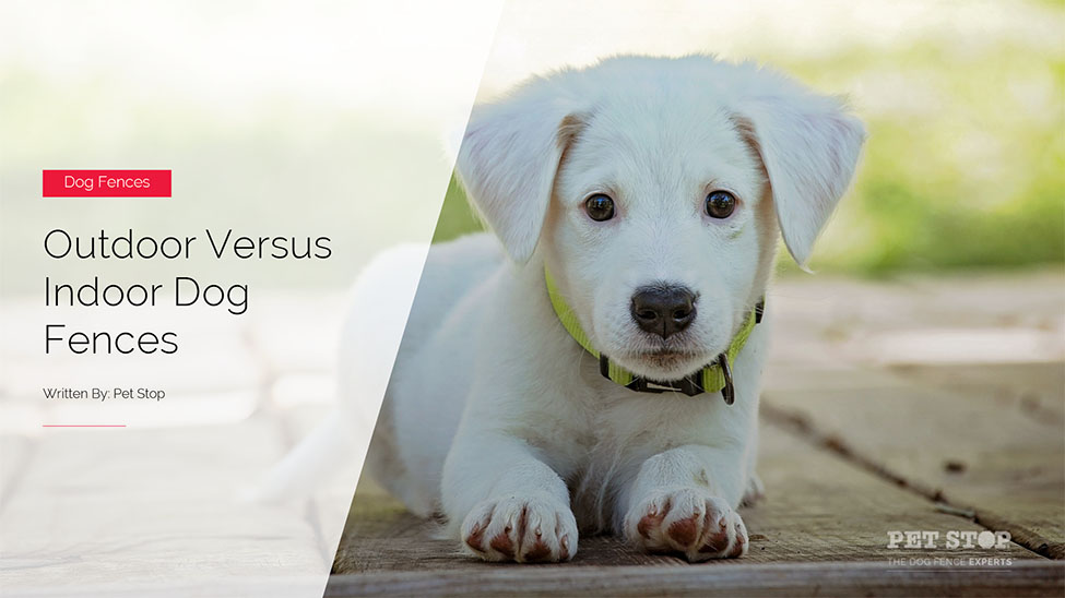 Pet Fences Archives • Pet Stop® Dog Fence Company