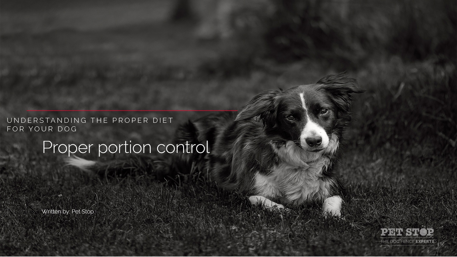 Best Dog Food Diet For Chronic Ear Infections