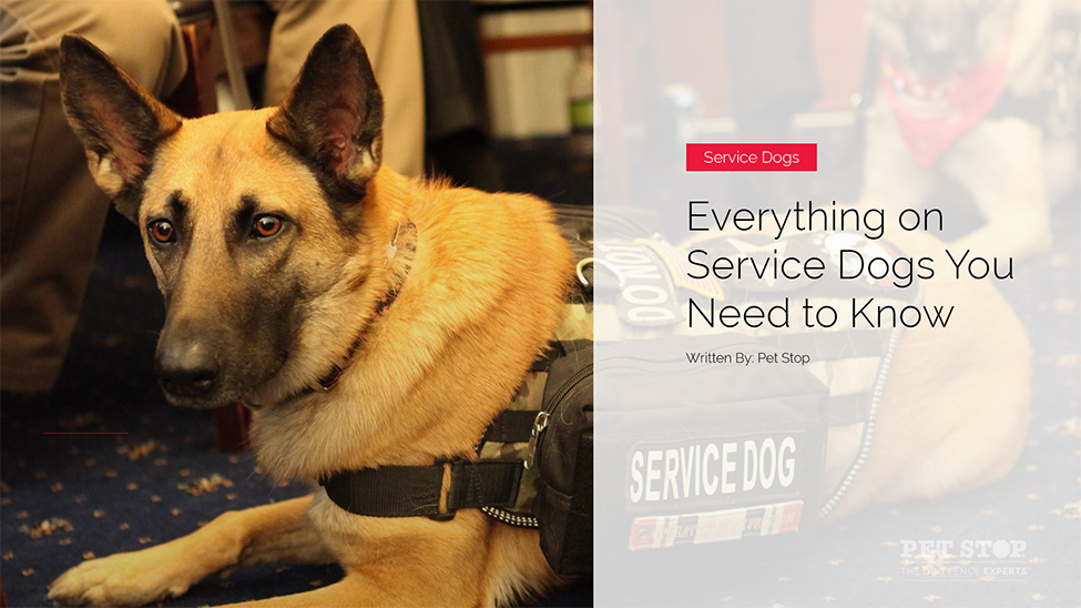 Everything You Need To Know About Service Animals Pet Stop Dog