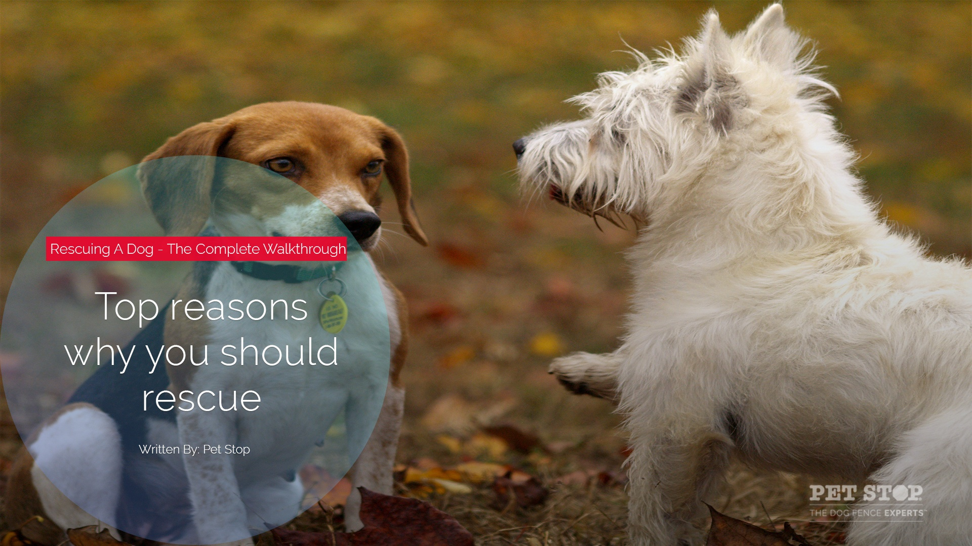 the reasons why you should consider getting a dog Great reasons you should be a dog owner like the amazing health benefits of stress relief to getting a adorable animal best friend subscribe to talltanic ht.